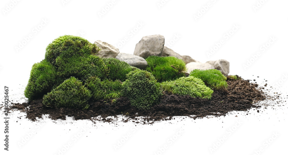 Fototapety, obrazy: Green moss with dirt, soil and decorative stone, rock isolated on white background