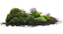 Green Moss With Dirt, Soil And...