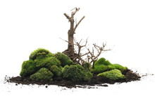 Green Moss With Twigs Isolated...
