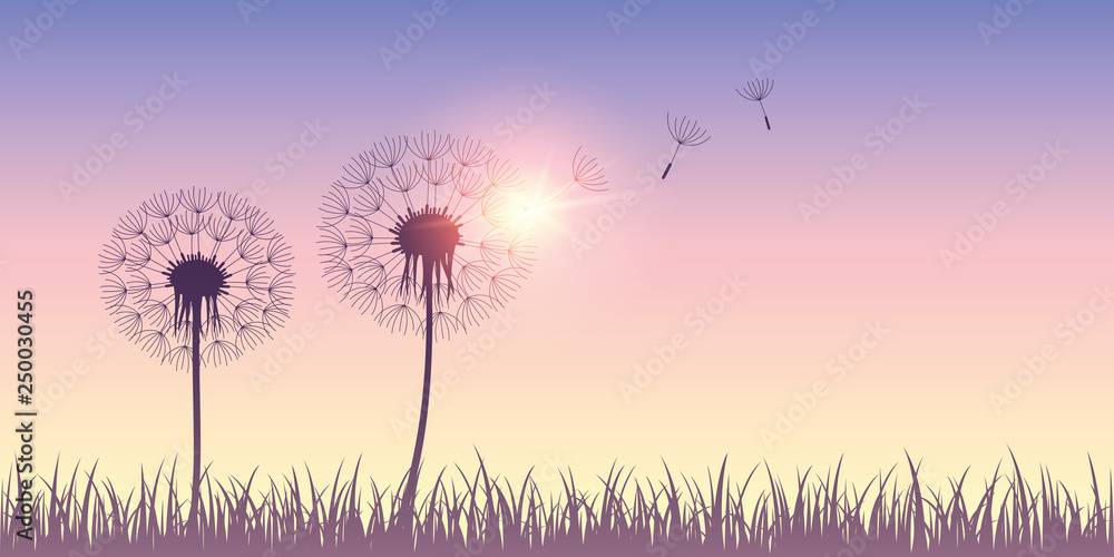 Fototapety, obrazy: dandelion silhouette with flying seeds on sunrise background vector illustration EPS10