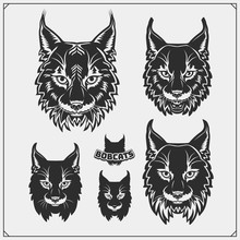 Set Of Bobcat Illustrations An...