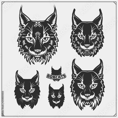 Set of bobcat illustrations and silhouettes Canvas Print