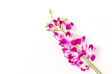 デンファレ Orchid Of Fe...