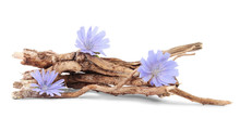 Dry Roots Of Chicory And Three Cichorium Flowers Isolated On White Background.