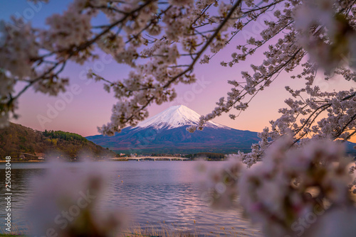 Mount Fuji with Cherry Blossom (sakura), view from Lake Kawaguchiko