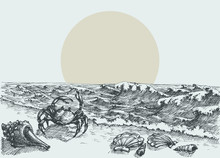 Sun Rise On The Beach Vector Hand Drawing. Sea Shells And A Crab In The Sand And Seaview