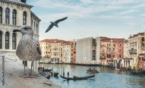 Photo  Seagull close up with Grand Canal background in Venice, Italy