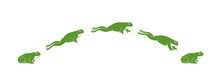 Frog Jumping. Isolated Frog Ju...