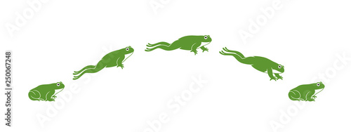 Valokuva Frog jumping. Isolated frog jumping on white background