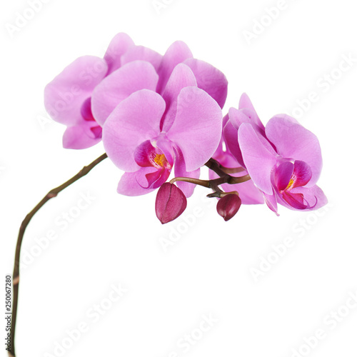Tuinposter Orchidee Orchids flowers on banch isolated.