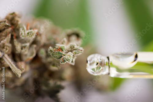 Fotografía  close up recreation marijuana medical cannabis oil cbd