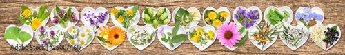 Fototapeta The most important medicinal plants obraz