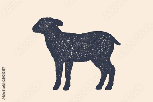 Lamb, sheep. Concept design of farm animals Canvas Print