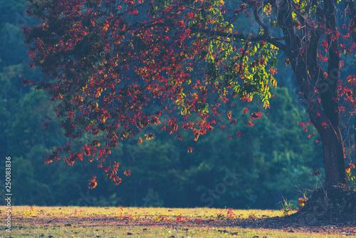 jesienne-drzewa-z-liscmi