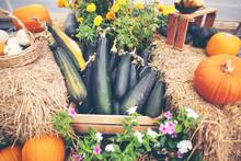 Fancy Pumpkin In Farm