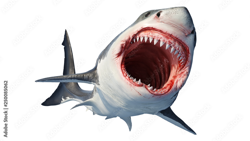 Fototapeta White shark marine predator with big open mouth and teeth. 3D rendering