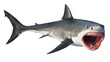 canvas print picture - White shark marine predator big open mouth. Isolated background. 3D rendering