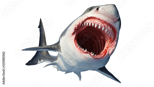 Valokuva White shark marine predator with big open mouth and teeth