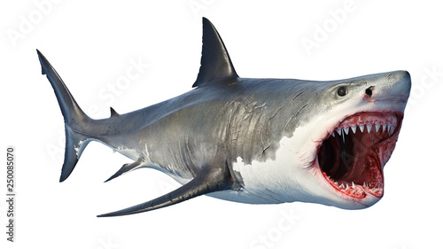 Fotografie, Obraz  White shark marine predator big open mouth. 3D rendering