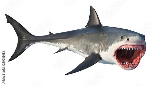 Valokuva  White shark marine predator big open mouth