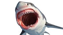 White Shark Marine Predator Wi...