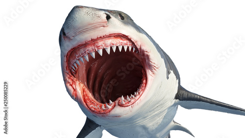 Valokuvatapetti White shark marine predator with big open mouth and teeth