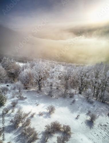zimny-zimowy-poranek-w-gorskim-lesie-ze-sniegiem-pokryte-jodly-przeswietna-plenerowa-scena-stara-planina-gora-w-bulgaria-piekno-natury