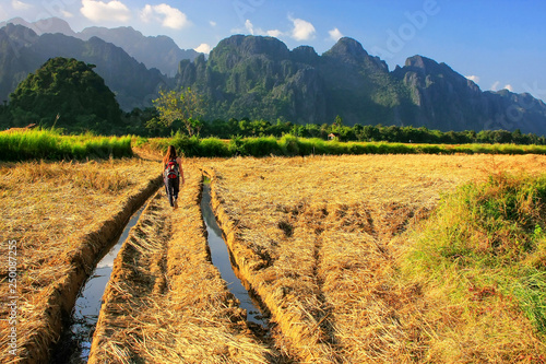 Harvested rice field surrounded by rock formations in Vang Vieng, Laos Canvas Print