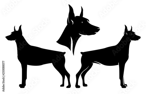 Fototapeta standing side view doberman pinscher and dog profile head - black and white vect