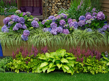 A Modern Environmental Garden With A Raised Bed With Hydrangias And Stipa