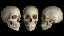 Human Skulls On A Black Backgr...
