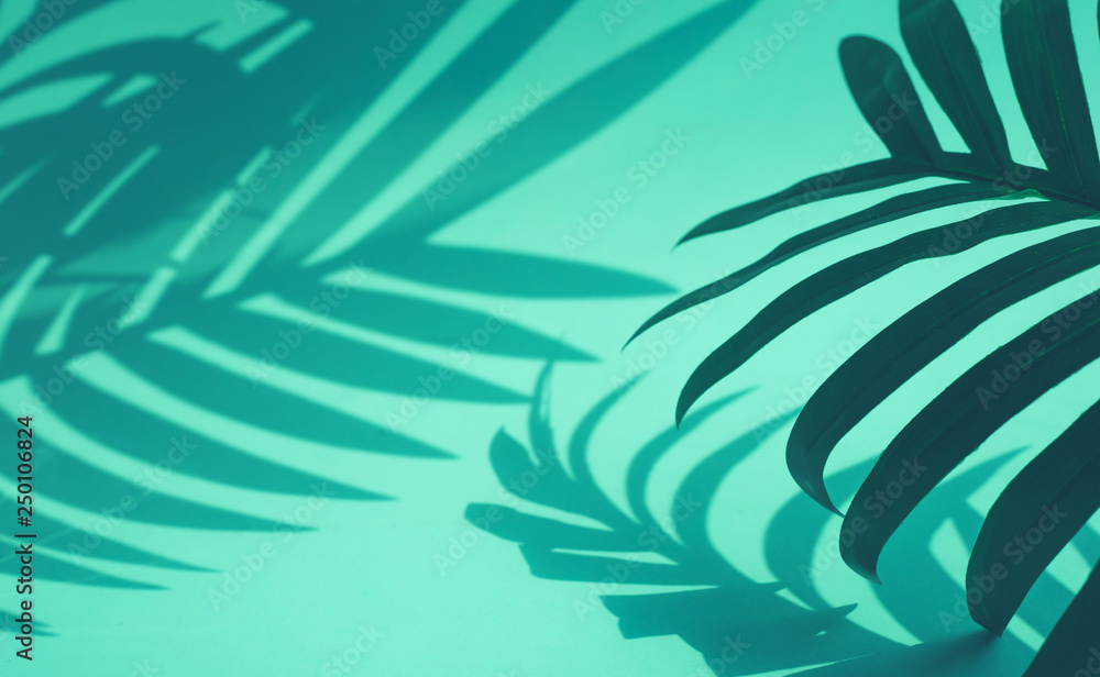 Fototapety, obrazy: Selective focus of coconut and palm leaf with shadow on colorful . background.Tropical and summer,holiday concepts