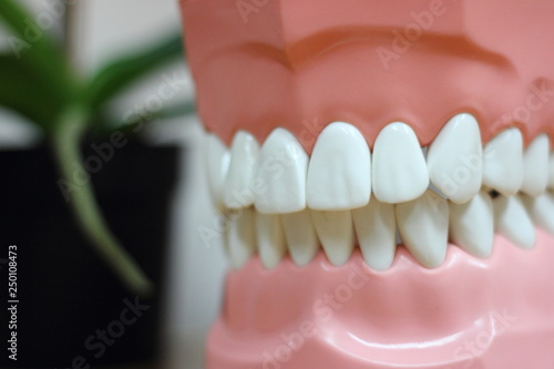Valokuvatapetti Healthy teeth in dummy jaw - medical equipment in the dental office