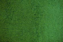 Snake Skin Pattern Texture Ba...