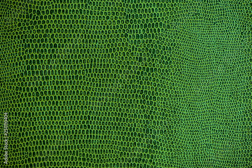 obraz lub plakat snake skin pattern texture background