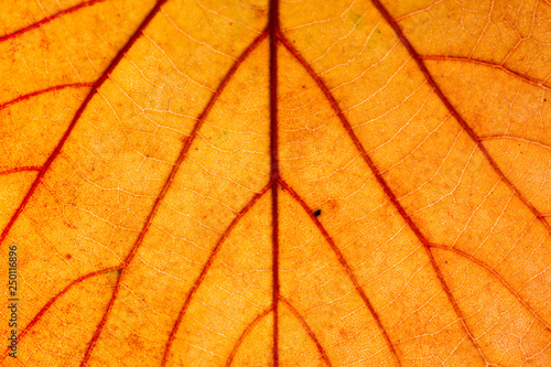 Canvas Print Yellow Leaf Macro Background