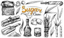 Cane Sugar With Leaves. Set Of Sugarcane Plants. Stalks And Bottle Of Rum, Wooden Plate Spoon, Cubes And Juice, Bamboo, Signboard Inscription. Engraving Hand Drawn Food And Natural Ingredients.