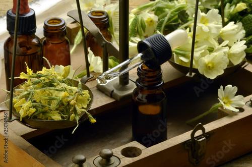 Obraz Primula vulgaris ft5103_0124 Jaglac Primevère Prímula Primeln - fototapety do salonu