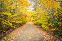 Gravel Road In Autumn In Cape ...
