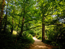 Beautiful Trees On The Woodland Path At Creswell Crags, Nottinghamshire, UK