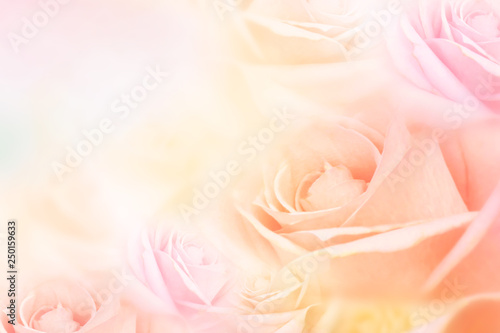 Fotografía  soft roses flower background with copy space for text idea for valentine and wed
