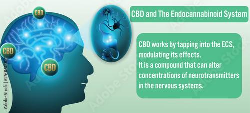 CBD and The Endocannabinoid System background.Vector illustration Canvas Print