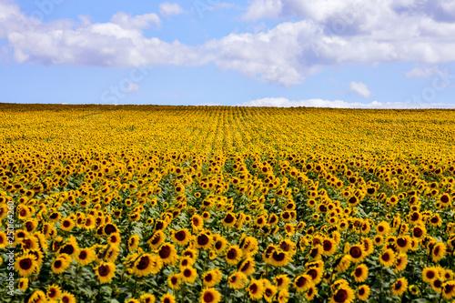 Foto auf Leinwand Honig European natural countryside