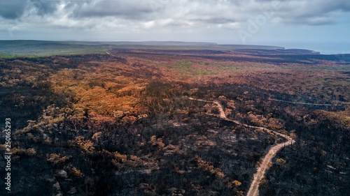 Photo Burnt landscape after bushfire aftermath