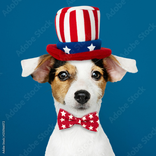 Fotografie, Obraz  Cute Jack Russell Terrier in Uncle Sam hat and bow tie