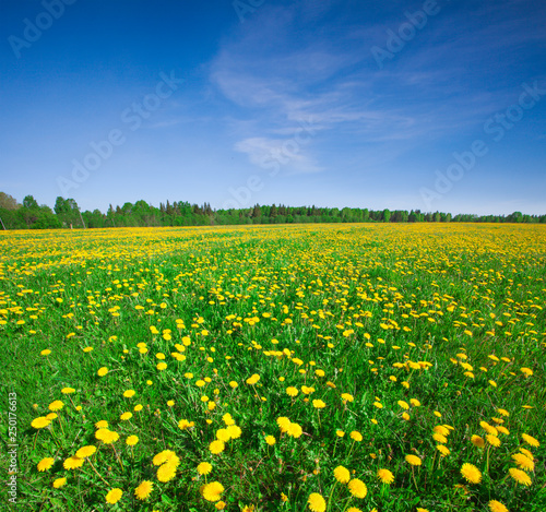 Tuinposter Groene Yellow flowers hill under blue cloudy sky