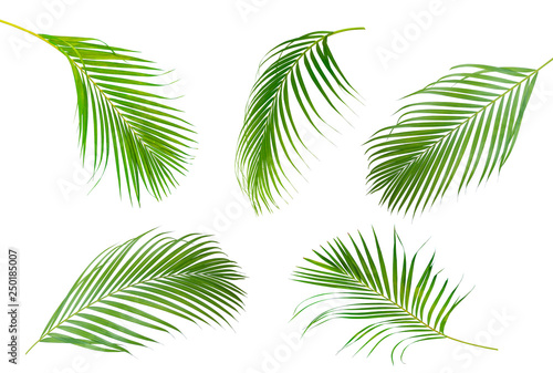 Foto auf AluDibond Palms Collection of Palm leaf which sway isolated on white background .