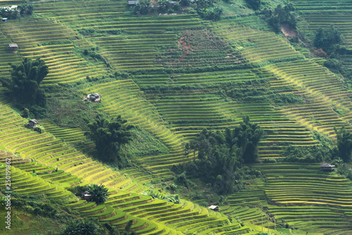 Staande foto Guilin landscape rice fields on terraced of Mu Cang Chai, YenBai, Vietnam