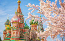 Moscow And St. Basil Cathedral At Spring Day Through Flowering Tree