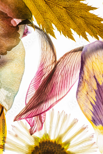 Fototapeta dried flowers on the white background obraz